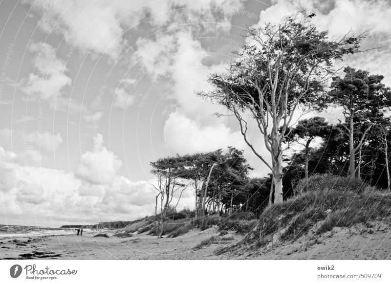 Wildes Holz Ausflug Ferne Freiheit wandern Mensch 2 Umwelt Natur Landschaft Pflanze Sand Wasser Himmel Wolken Horizont Klima Schönes Wetter Wind Baum Küste