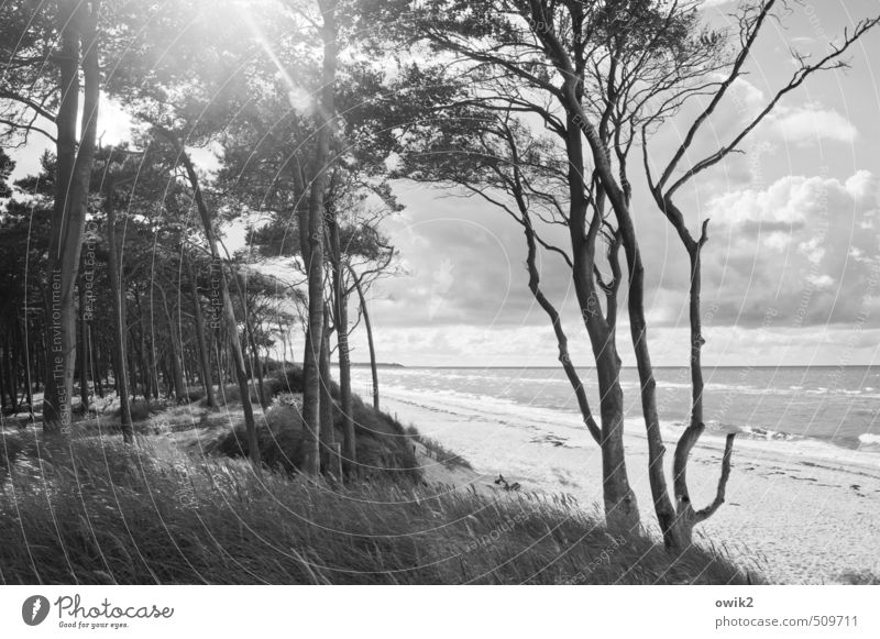 Nordlicht Himmel Natur Pflanze Baum Landschaft Ferne Wald Umwelt Gras Küste hell Horizont Wetter Idylle leuchten Klima