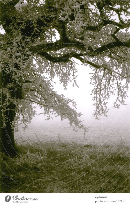 Baum Winter Einsamkeit kalt Schnee Wiese Landschaft Nebel Frost Romantik Ast Raureif Eindruck