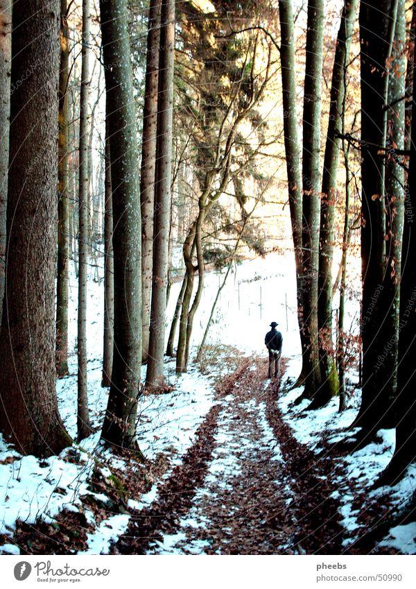 der mann im wald Mann Baum Sonne Winter Wald Schnee Spaziergang Spuren Hut