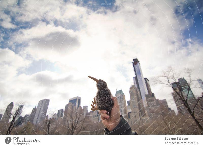 Kiwi Kong Ferien & Urlaub & Reisen Tier Haus Hochhaus Bankgebäude Skyline Stadtzentrum fremd New York City Manhattan Stofftiere Besucher Kiwi Australier Central Park