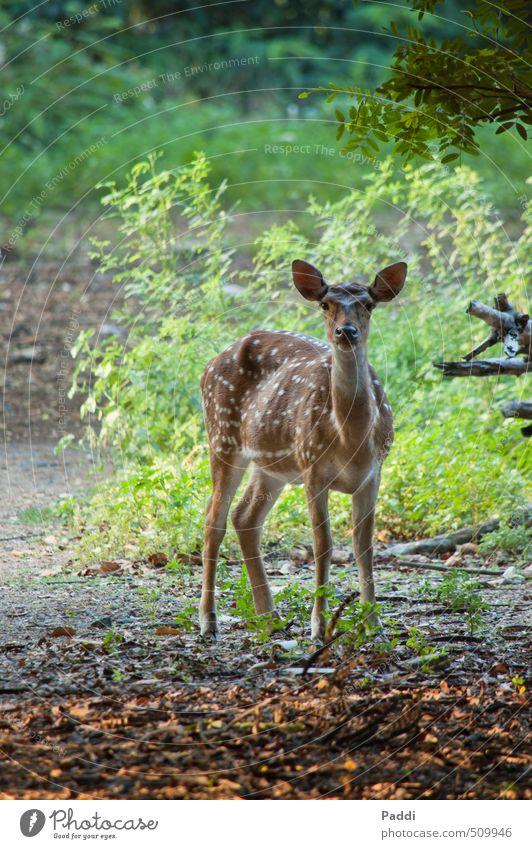 Reh Natur Pflanze Landschaft ruhig Tier Umwelt Zufriedenheit Wildtier Vertrauen Wachsamkeit Mut achtsam