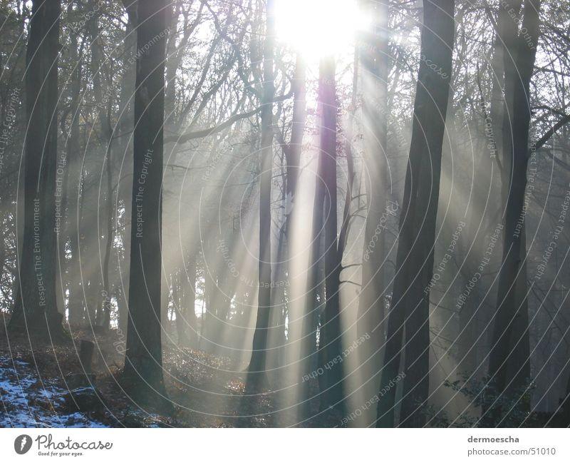 Blick in den Wald Baum Sonne Winter Schnee