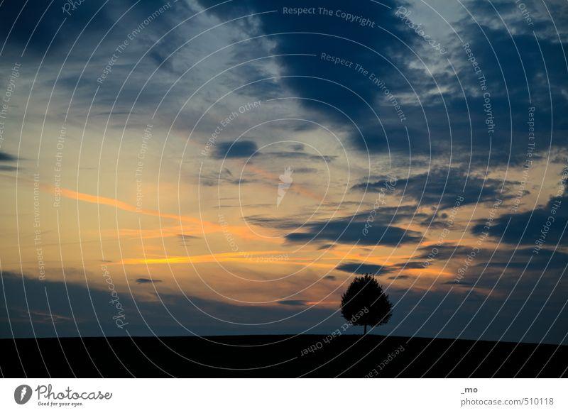 scherenschnitt Himmel blau Baum Erholung Landschaft Wolken schwarz Ferne gelb Gefühle Freiheit Horizont Luft orange Feld frei