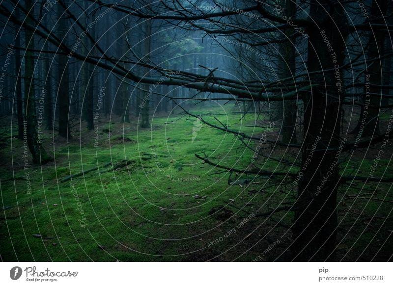märchenwald Umwelt Natur Landschaft Herbst schlechtes Wetter Nebel Baum Moos Fichte Tanne Fichtenwald Wald dunkel gruselig blau braun schwarz Waldlichtung ruhig