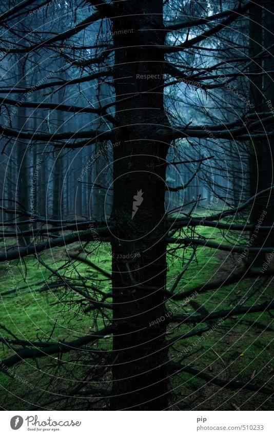 schauermärchenwald Umwelt Natur Landschaft Herbst schlechtes Wetter Nebel Baum Moos Tanne Fichte Fichtenwald Wald dunkel gruselig blau grün schwarz Waldlichtung