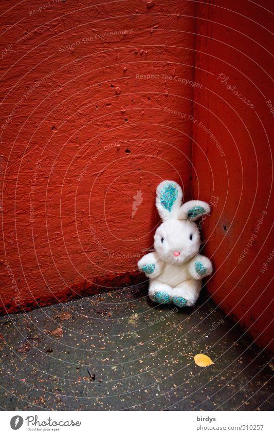 killing me softly Herbst Blatt Mauer Wand Ecke Hase & Kaninchen 1 Tier Stofftiere Blick sitzen warten schön niedlich rebellisch grau rot weiß träumen Einsamkeit