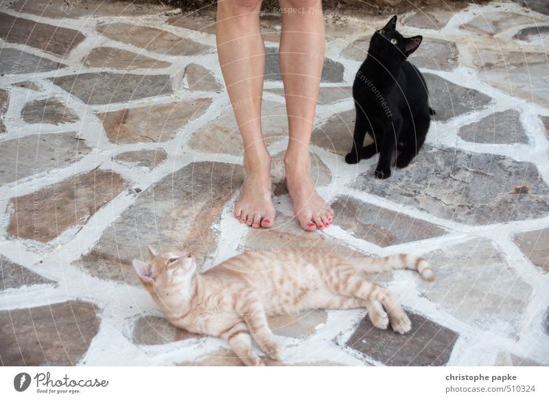 Sie liegen ihr zu Füßen feminin Fuß Tier Haustier Katze 2 beobachten frech Neugier niedlich Leidenschaft Sympathie Tierliebe Appetit & Hunger kuschlig Miau