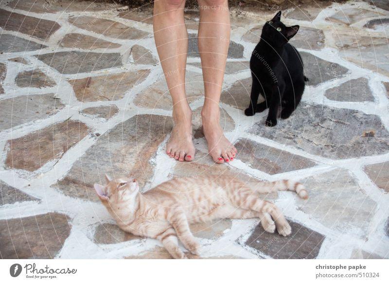 Sie liegen ihr zu Füßen Katze Tier feminin Fuß niedlich beobachten Neugier Appetit & Hunger Leidenschaft Haustier frech kuschlig Sympathie Tierliebe Miau