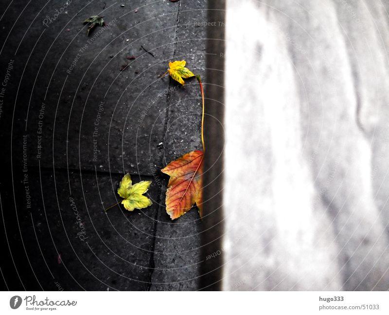 Fallende Blätter... grün rot Blatt gelb Herbst Holz grau Stein Bank liegen fallen zufällig