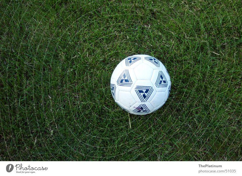 Fußball auf saftigem Gras grün Freude Wiese Spielen Freiheit Deutschland frisch Ball rund