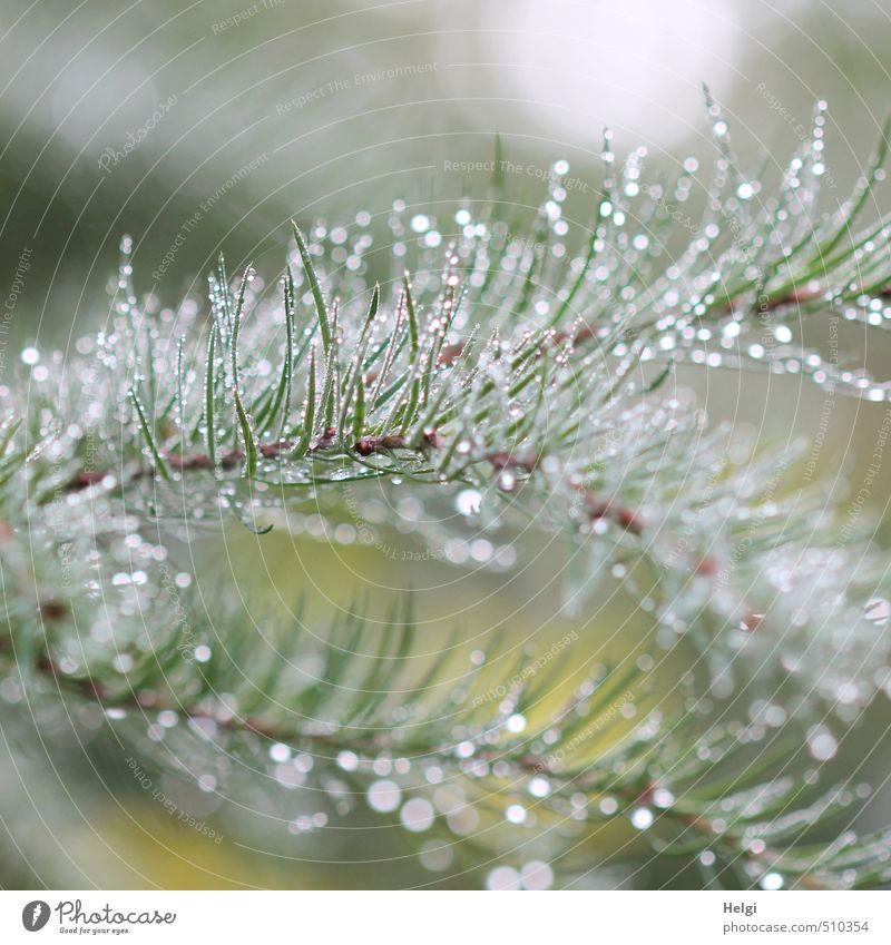 bedröppelt... Natur schön grün weiß Wasser Pflanze Baum ruhig kalt Wald Umwelt Herbst natürlich außergewöhnlich braun glänzend
