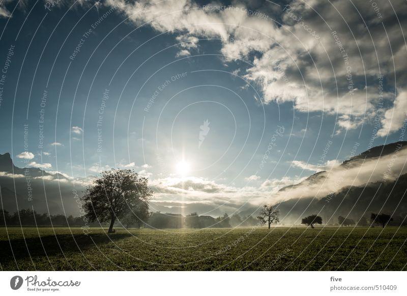 morgenstund II Umwelt Natur Landschaft Erde Himmel Wolken Sonne Sonnenaufgang Sonnenuntergang Sonnenlicht Herbst Schönes Wetter Nebel Pflanze Baum Wiese Feld