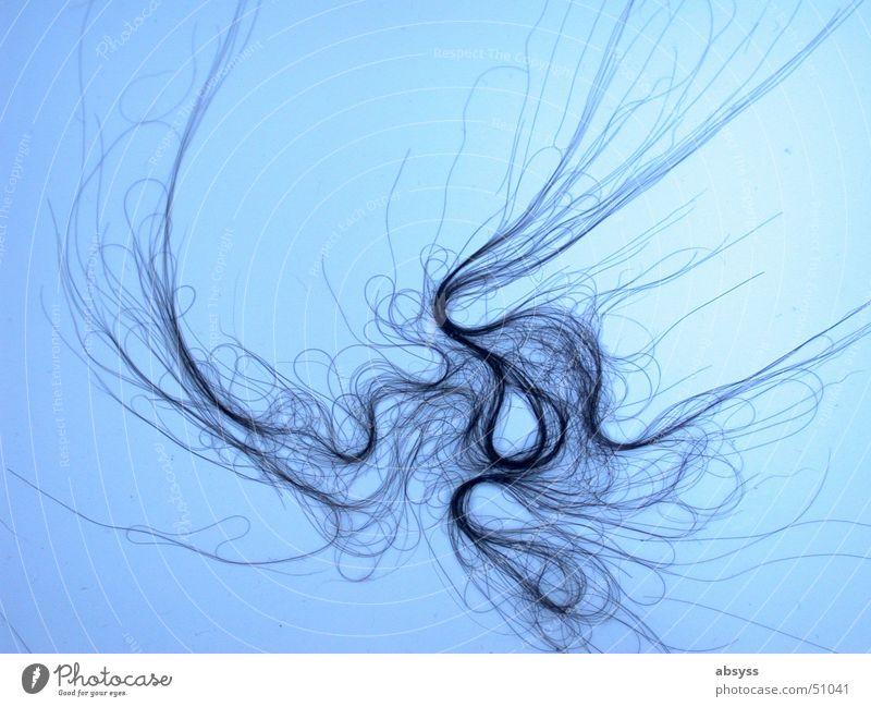 haarig * der kreative (alp)traum jeder WG schwarz lang Wohngemeinschaft geschmackvoll Haare & Frisuren blau skuril Strukturen & Formen Linie