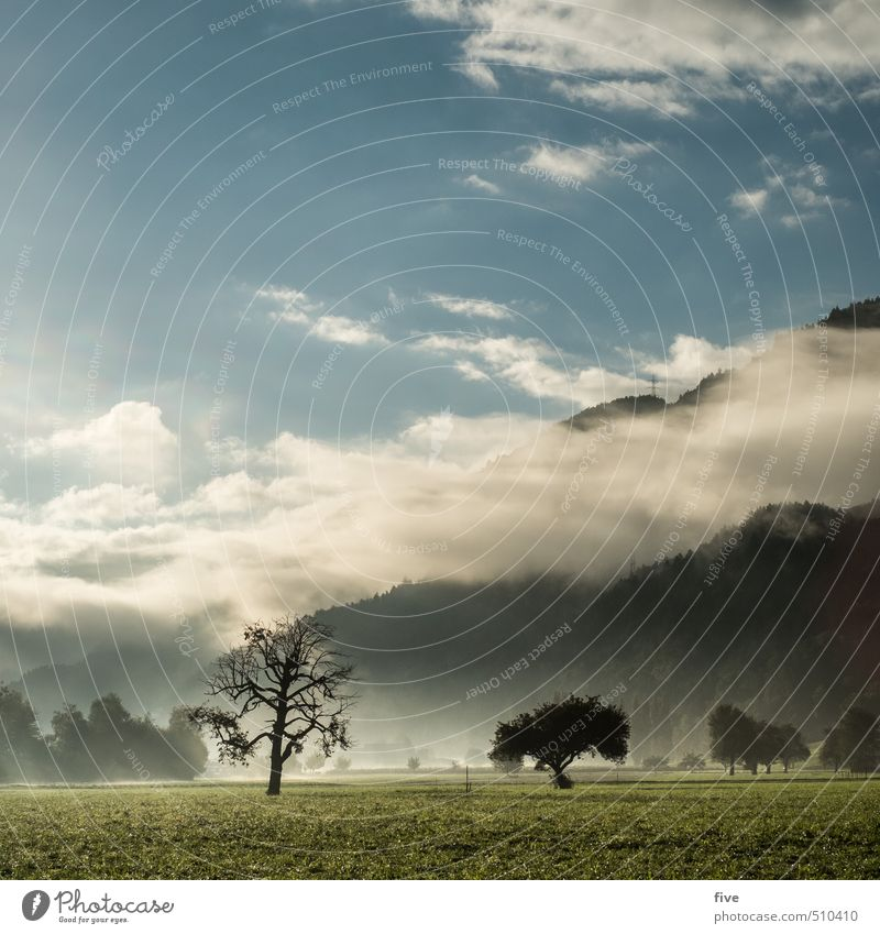 morgenstund Umwelt Natur Landschaft Pflanze Himmel Wolken Sonne Sonnenaufgang Sonnenuntergang Sonnenlicht Herbst Baum Wiese Feld Wald Hügel Felsen