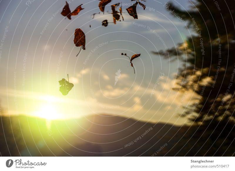 Autumn evening Himmel Natur blau Einsamkeit Landschaft Wolken Blatt schwarz gelb Wärme Traurigkeit Herbst Glück Horizont Stimmung Zufriedenheit