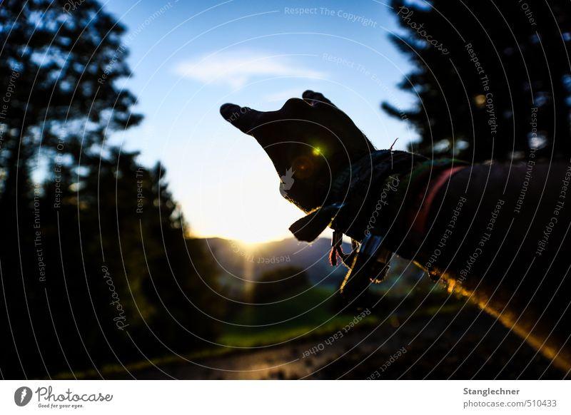Freiheit Mensch Natur Jugendliche Ferien & Urlaub & Reisen Sommer Hand Berge u. Gebirge Herbst Feste & Feiern Party Stimmung Arbeit & Erwerbstätigkeit maskulin Musik Tanzen Lifestyle