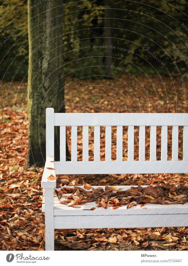 herbst. Natur Herbst Baum Blatt Erholung hell nass Mittelpunkt Bank kalt sitzen Holz weiß Park Pause Farbfoto Gedeckte Farben Außenaufnahme Menschenleer