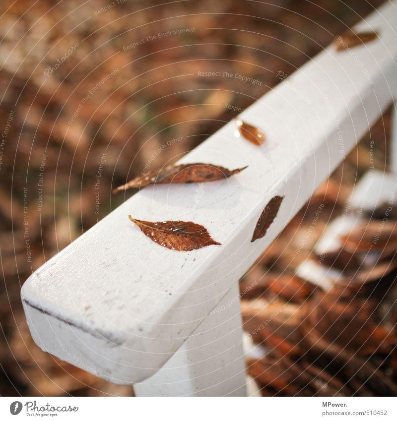 herbst.. Natur Herbst Baum Blatt Erholung hell nass Mittelpunkt Bank kalt sitzen Holz weiß Park Pause Farbfoto Gedeckte Farben Außenaufnahme Menschenleer
