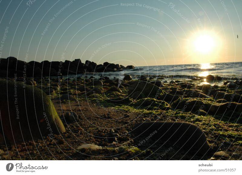 ein Tag vergeht Wasser Sonne grün Strand Ferien & Urlaub & Reisen Stein Dänemark