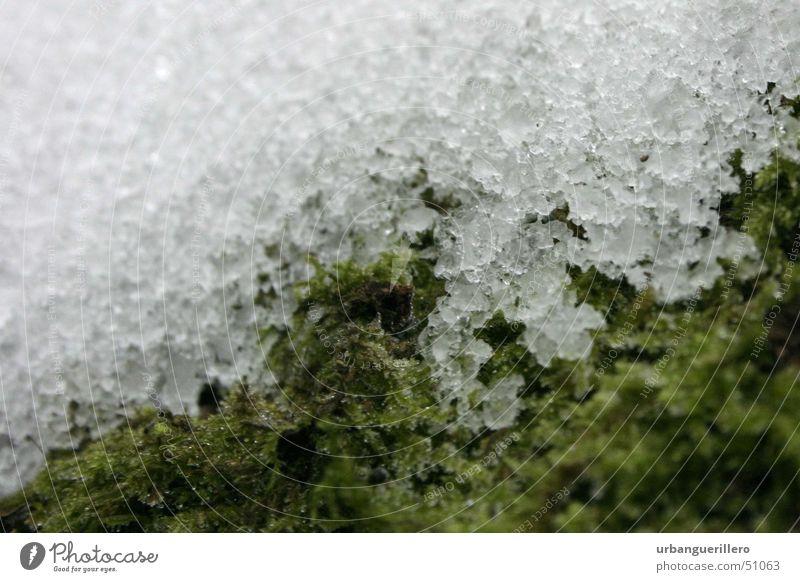schnee auf moos weich kalt weiß grün klein Mikrofotografie Makroaufnahme hart schmelzen Schneeschmelze Schneekristall Verlauf Schwache Tiefenschärfe Unschärfe