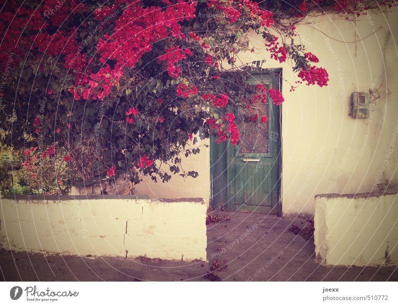 Wann kommst Du? Sträucher Dorf Haus Mauer Wand Fassade Tür alt historisch schön braun grün violett Idylle Kontakt Farbfoto Gedeckte Farben Außenaufnahme