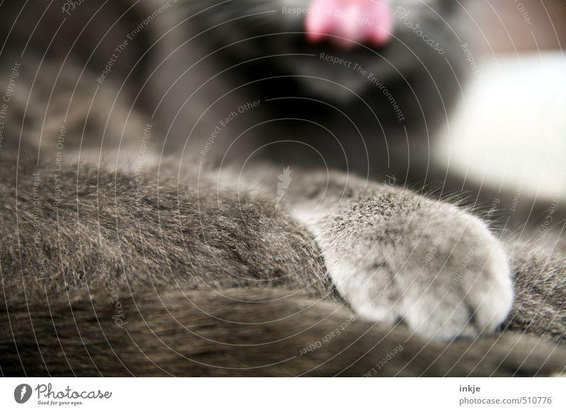 heute gabs Lachs | Leckeres Katze Erholung ruhig Tier Gefühle liegen Zufriedenheit Sauberkeit weich Pause Fell nah lecker Haustier Pfote kuschlig