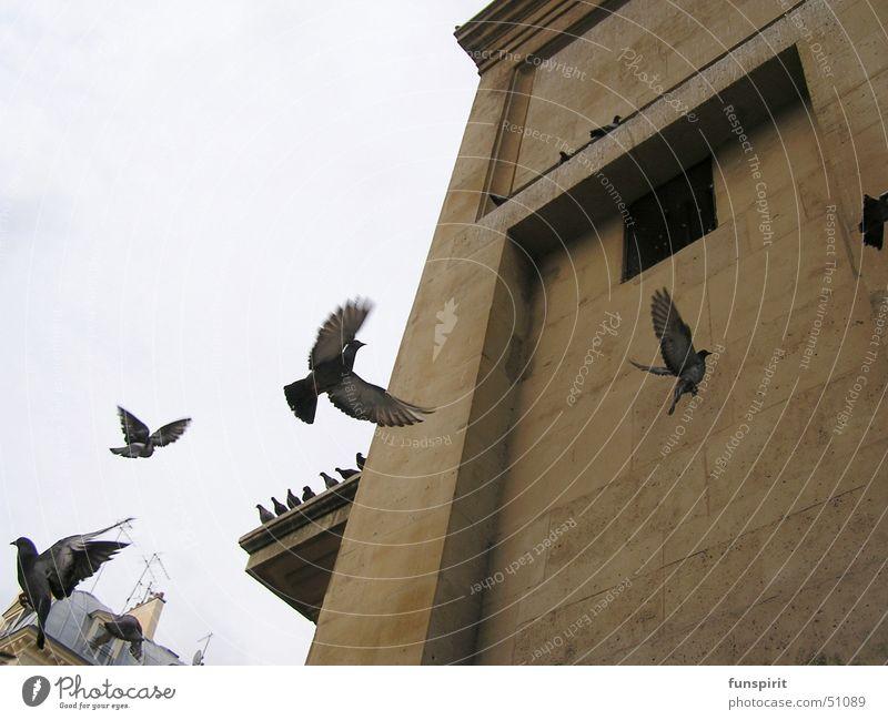 Seelenreise Himmel Ferien & Urlaub & Reisen Tier Architektur Gefühle Tod Freiheit fliegen Vogel Luftverkehr Turm Sehnsucht Abheben Paris Taube