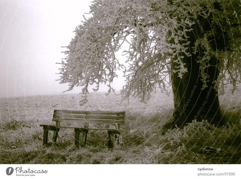 Baum mit Bank Winter ruhig kalt Schnee Wiese Landschaft Stimmung Nebel Frost Romantik Ast Raureif Eindruck