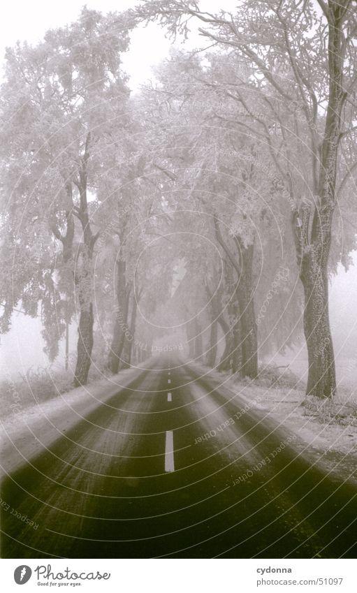 Straße Streifen Winter Baum Einsamkeit ruhig Eindruck Allee Verkehrswege Schwarzweißfoto Schnee Frost Raureif Landschaft Perspektive Linie