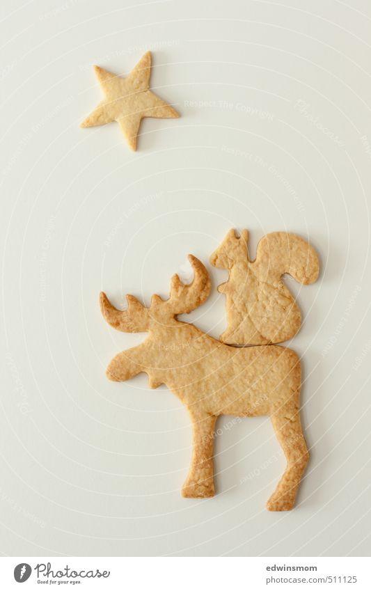 Weihnachtskekse :) Süßwaren Plätzchen Feste & Feiern Winter Elch Eichhörnchen 2 Tier Essen genießen Blick lecker niedlich süß gold weiß Laster Vorfreude