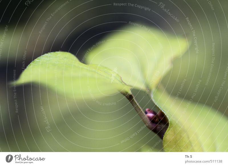 Blatt Natur grün Farbe Erholung Wald Freiheit ästhetisch harmonisch