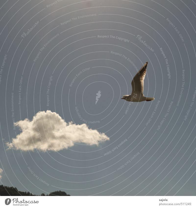 möwe jonathan Umwelt Natur Tier Himmel Wolken Sonnenlicht Schönes Wetter Wildtier Vogel Möwe 1 fliegen leuchten ästhetisch blau Sonnenstrahlen Farbfoto
