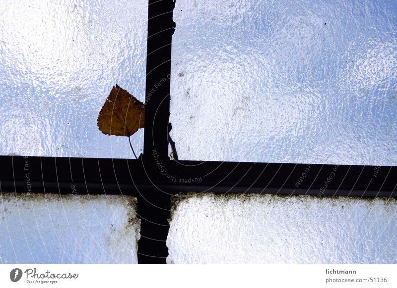 Am Fensterkreuz Blatt Gewächshaus