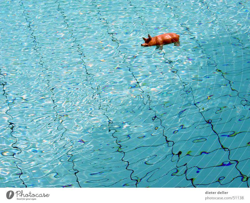 MeerSchweinchen Wasser blau Hintergrundbild Schwimmbad Fliesen u. Kacheln durchsichtig Schwein Im Wasser treiben Wasseroberfläche Schweinerei Tierfigur Plastikfigur