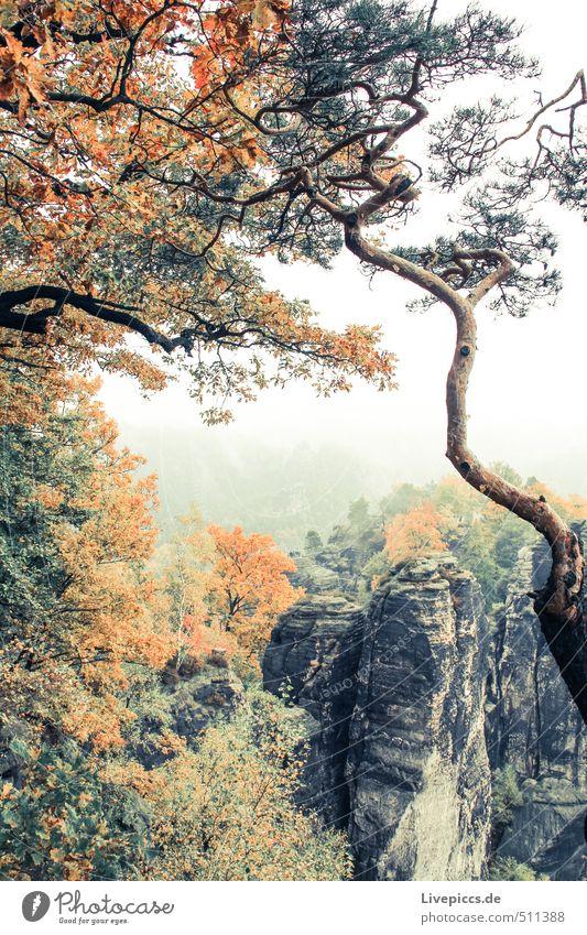Urlaub in Sachsen Ferien & Urlaub & Reisen Tourismus Ausflug Berge u. Gebirge wandern Umwelt Natur Landschaft Pflanze Himmel Wolken Herbst Nebel Baum Felsen