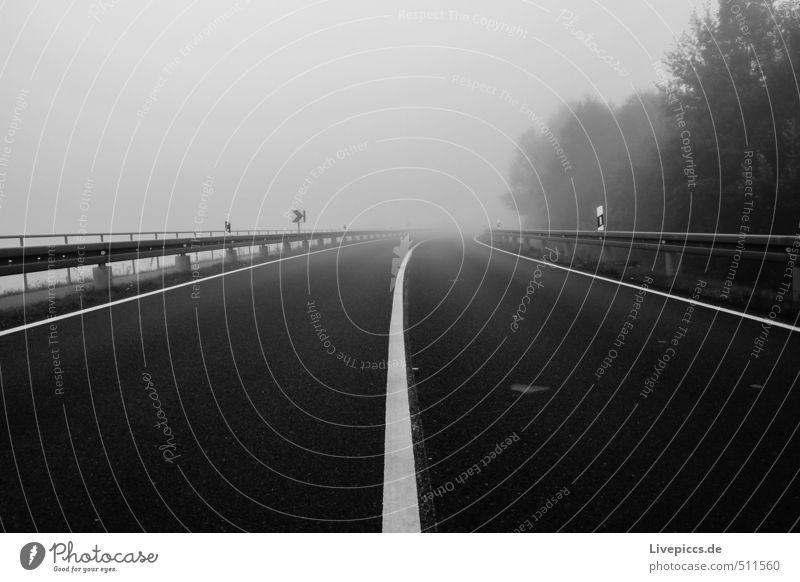 Straße nach... Umwelt Natur Landschaft Luft Himmel Herbst schlechtes Wetter Nebel Pflanze Baum Gras Sträucher Wildpflanze Feld Wald Verkehr Verkehrswege Stein