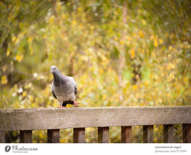 Herbst-Tänzchen grün Freude Tier Umwelt lustig Glück braun Vogel orange Park Zufriedenheit Wildtier Tanzen Schönes Wetter Fröhlichkeit