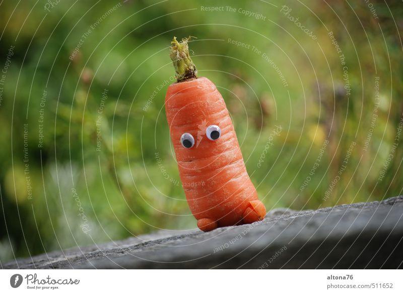 Neulich im Gemüsebeet... Natur grün Freude Gefühle natürlich Gesundheit Garten Lebensmittel orange sitzen warten frisch Fröhlichkeit Kommunizieren genießen