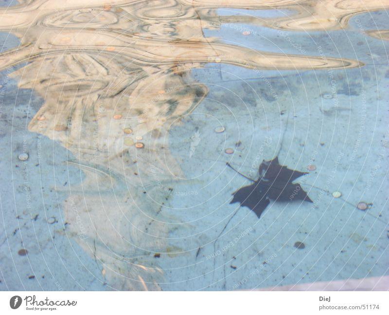Glückspenny Brunnen Buckingham Palace London Europa Großbritannien Statue Reflexion & Spiegelung Wellen Blatt Herbst Wunsch wiederkommen Wasser hell blau