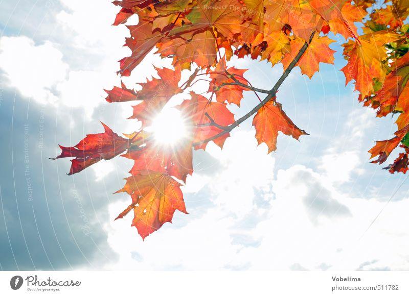 Ahornzweige im Herbst blau weiß Pflanze Baum rot Wald gelb braun orange gold