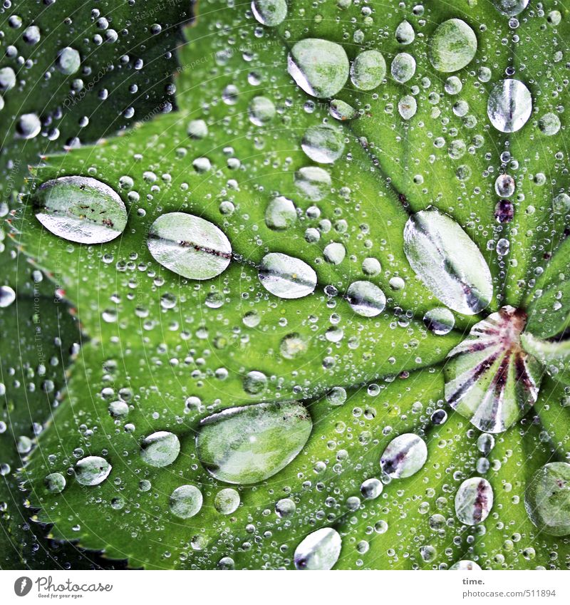 Pflanze | besoffen Natur grün Wasser nackt Blatt Leben Traurigkeit Wege & Pfade Frühling Lebensmittel Regen Park Design Ordnung Perspektive