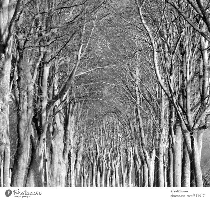 Schwarz(weiß)wald wandern Erneuerbare Energie Natur Landschaft Pflanze Baum Blatt Wildpflanze Park Wald Holz Wachstum bedrohlich schwarz Traurigkeit Ferne