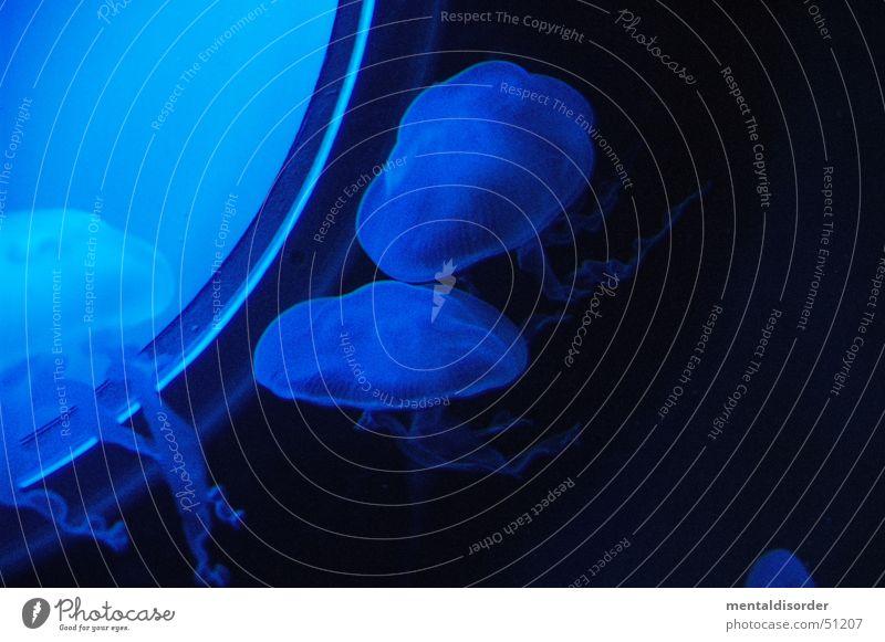blau und instabil II Wasser Fenster tauchen Qualle Tentakel