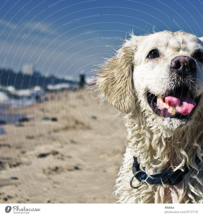 Spiel mit mir! Hund Natur Freude Strand Umwelt Leben Gefühle Küste Spielen Schwimmen & Baden Freundschaft Wellen blond Perspektive Fröhlichkeit Kommunizieren