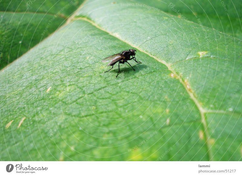 Die Fliege Natur grün ruhig Blatt schwarz Tier Farbe warten Monochrom