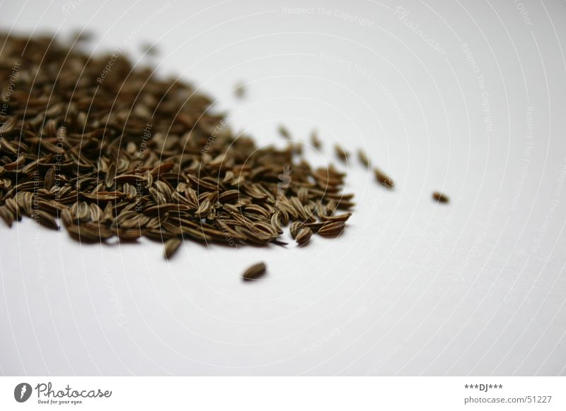 Kümmel Ernährung braun Kräuter & Gewürze Korn Textfreiraum Samen Haufen Zutaten verfeinern Kümmel Foodfotografie Vor hellem Hintergrund
