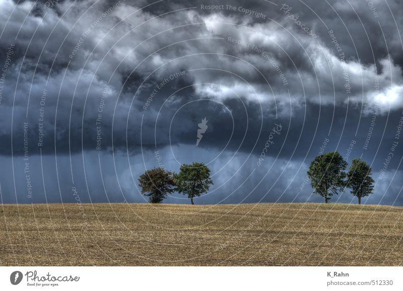 Bäume Natur Landschaft Pflanze Luft Himmel Wolken Gewitterwolken Sommer Wetter schlechtes Wetter Wind Regen Baum Feld Hügel Stimmung Kraft Romantik ruhig