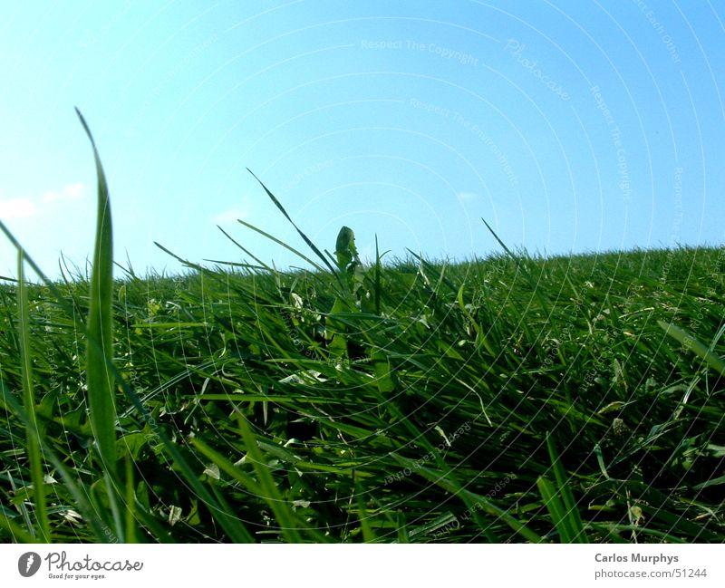 Remember: Summer Himmel Sonne grün blau Sommer Freude Erholung Wiese springen Gras Frühling Rasen Schönes Wetter himmelblau Frühlingsgefühle hell-blau