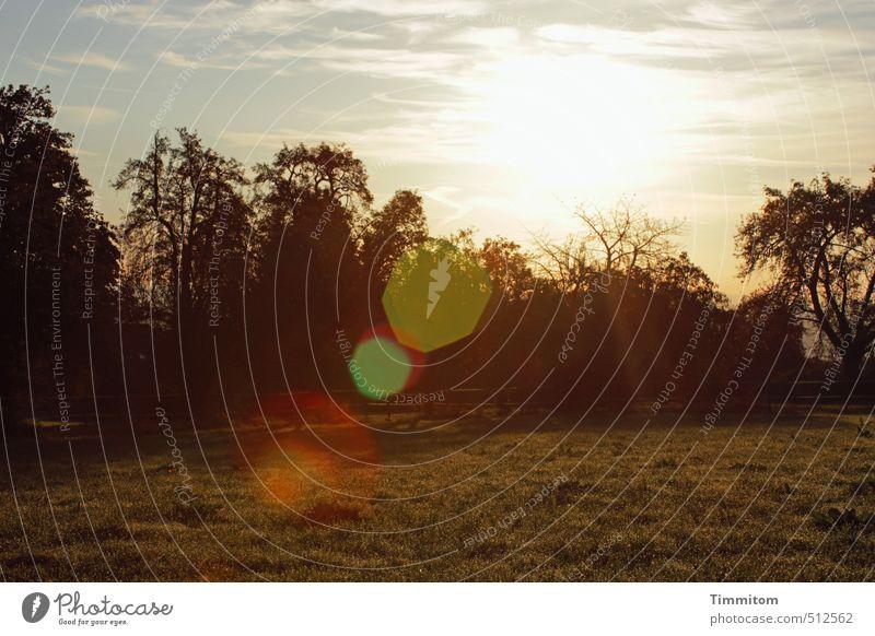 Guten Morgen! Umwelt Natur Pflanze Himmel Wolken Sonne Herbst Schönes Wetter Baum Gras Blick einfach natürlich Gefühle Sonnenstrahlen Blendenfleck gold Farbfoto